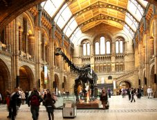 amex-natural-history-museum
