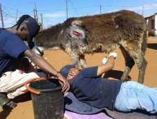 NHT Highveld Horse Care Unit